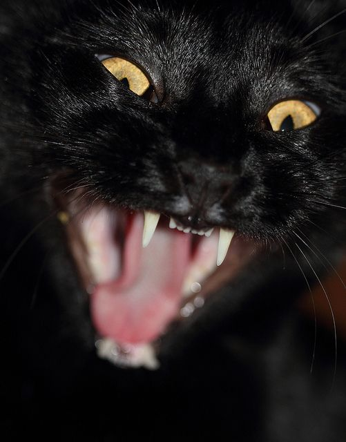 9 Tips To Stop Your Cat From Biting Cat biting, Cats and
