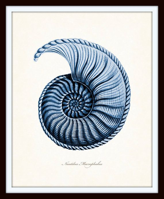 D Nautilus Shell And Famous Geometric Art Print Home Decor Wall Art Poster