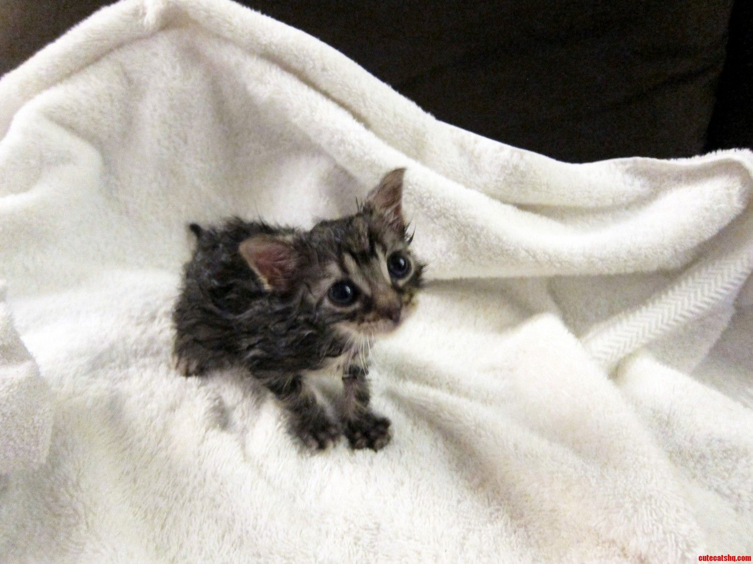 Merlins First Bath Kitten Rescue Cute Cats And Kittens Calico Kitten
