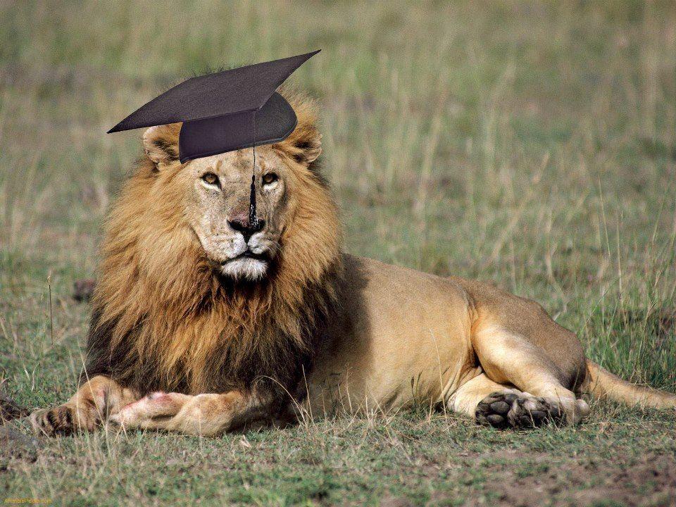 study anywhere, even the Serengeti