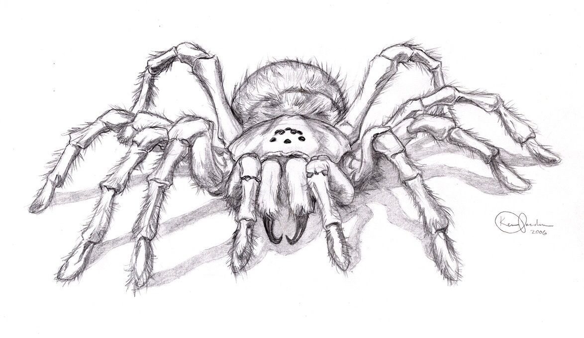 Realistic Spider Drawing Dessin Pinterest