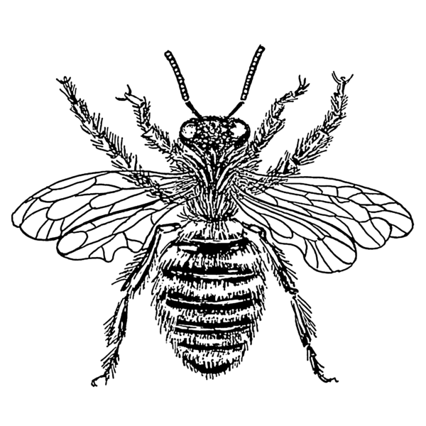 Anatomy Of Bee Hive Here Is An Image Of The Blastophaga And Here