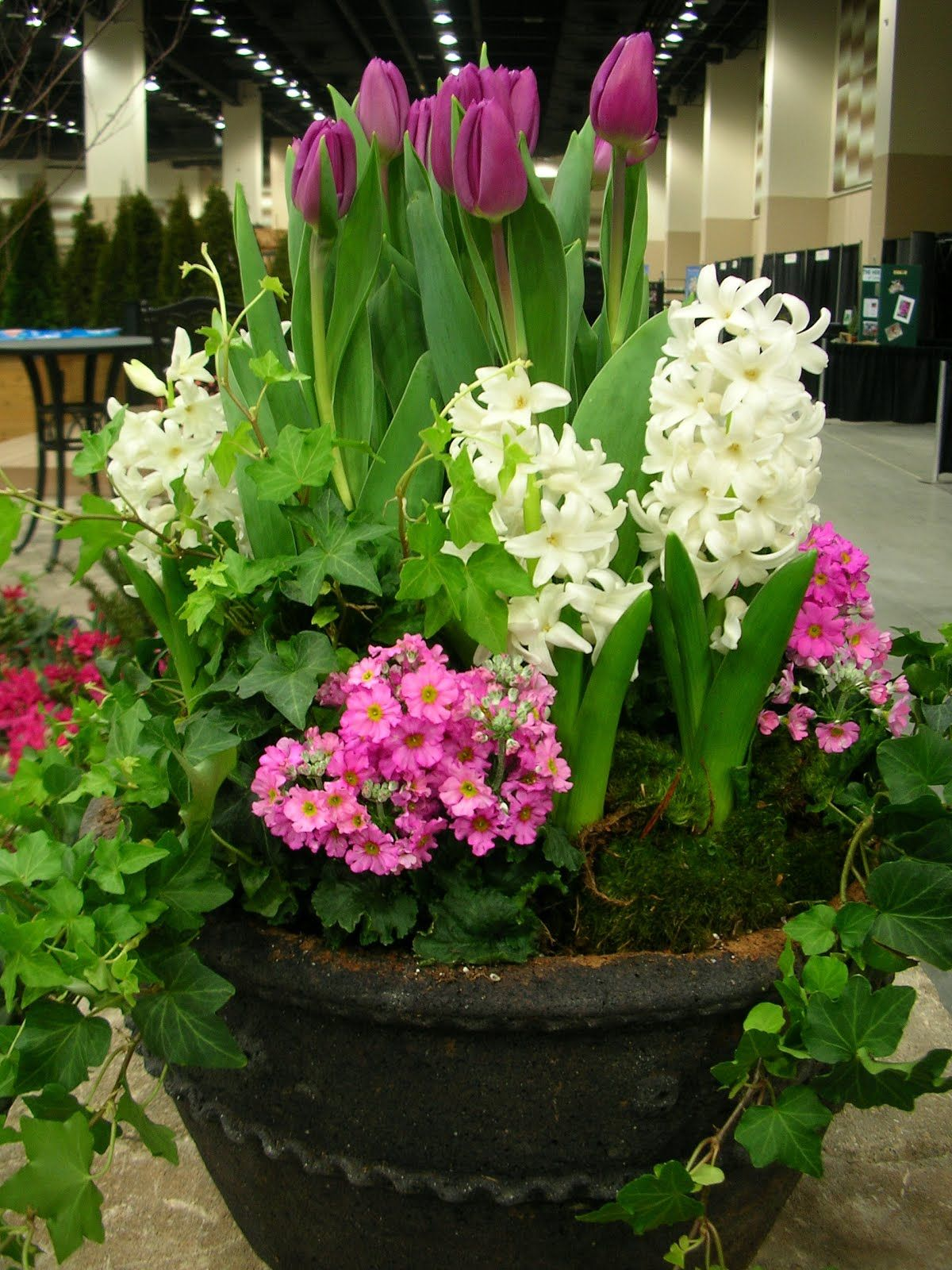 Hyacinth Tulips Ivy Spring Container Front Porch Steps Good Job Looks Fab Garden Containers Spring Garden Container Flowers