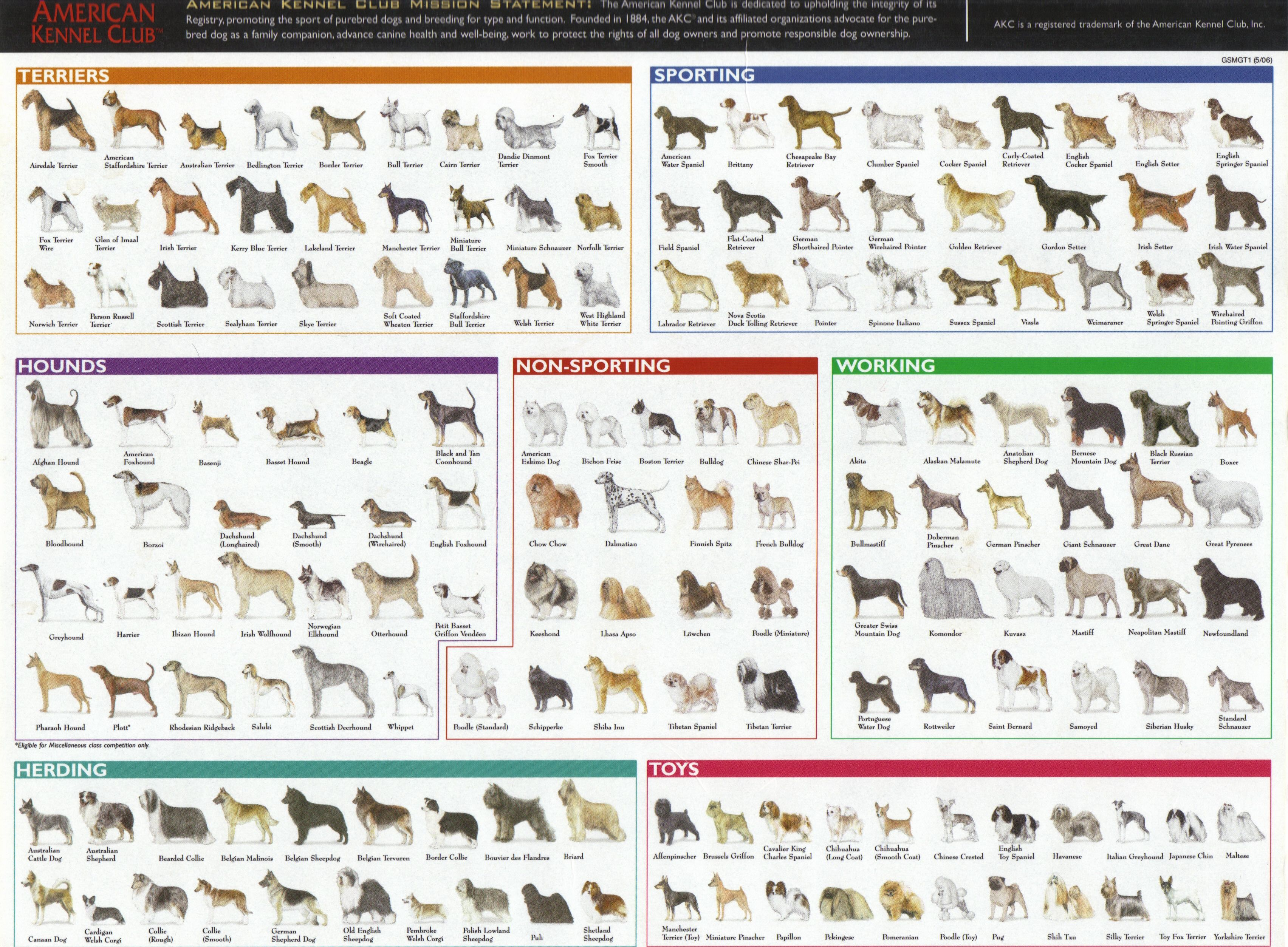 Dog Breed Chart | Dogs | Pinterest | Cat breeds, Pictures and Akc ...