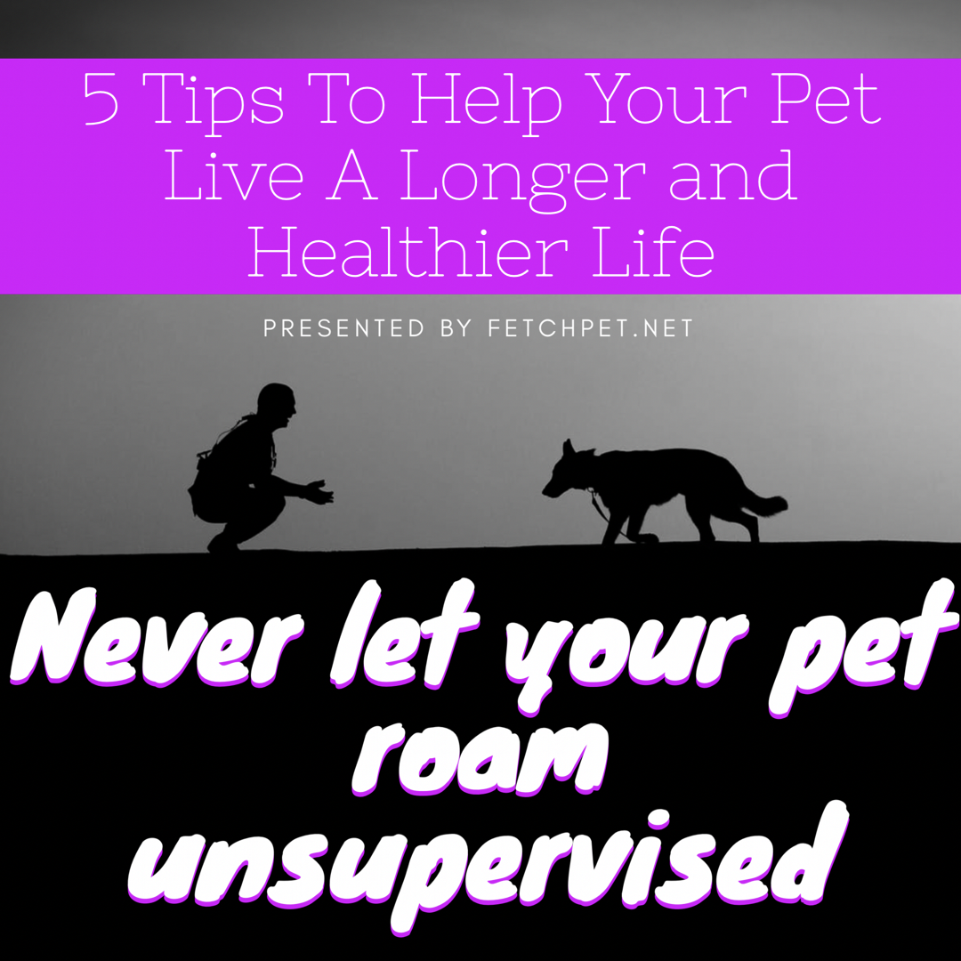 Never Let Your Pet Roam Unsupervised Tip Number 3 By Fetchpet Net Whether It S Your Dog Or Your Cat Don T Let Them Go Outs Family Pet Your Pet Dog Lovers
