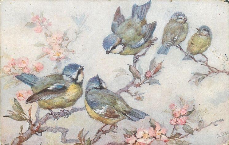 Five Blue Yellow White Birds On Cherry Blossom Tree Tuckdb Art Bird Art Vintage Birds