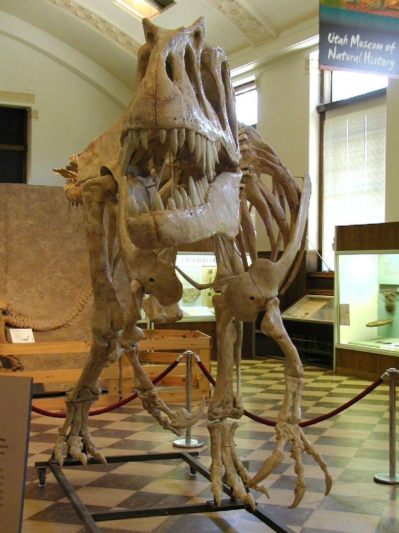 Saurophaganax Maximus Umnh 2003