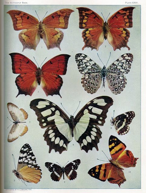 Rare Book Collection Of Botanical Butterfly Printables