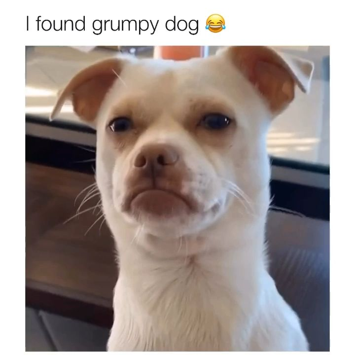 Photo of He's literally this emoji -> ☹️