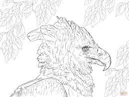 Harpy Eagle Coloring Google Search Sketches Coloring Pages