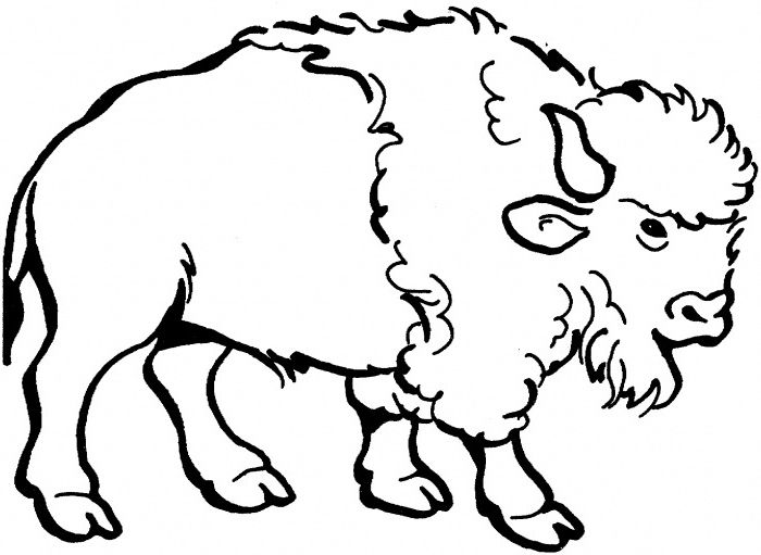 nice american bison coloring page for kids  coloring