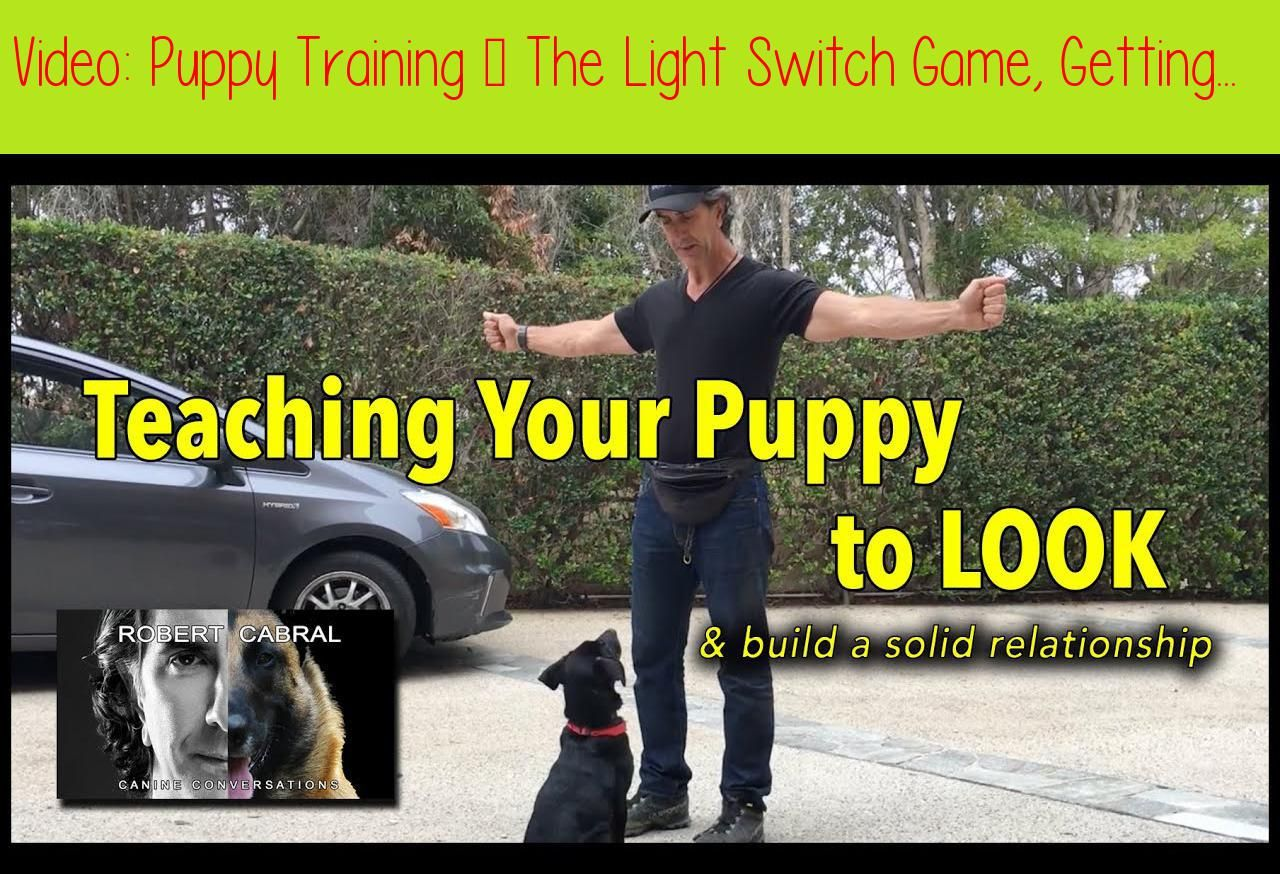 Puppy Training The Light Switch Game Getting Your Puppy To Look