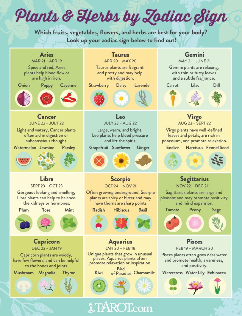 Plants And Herbs For Your Zodiac Sign Herbs Zodiac Signs Zodiac