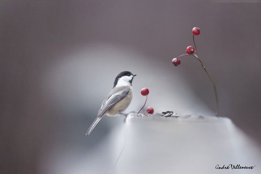 Lovely view by Andre Villeneuve on 500px