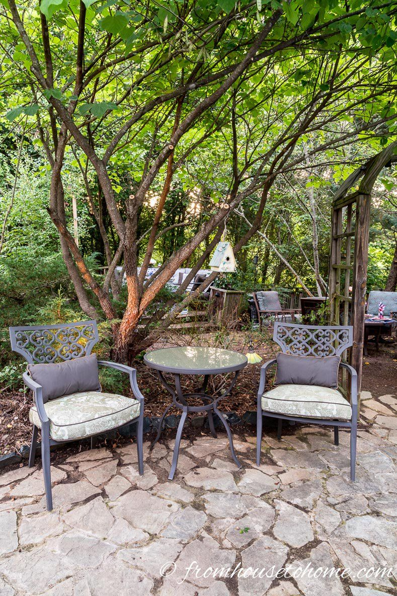 Best Backyard Trees (To Provide Shade And Privacy For A ...