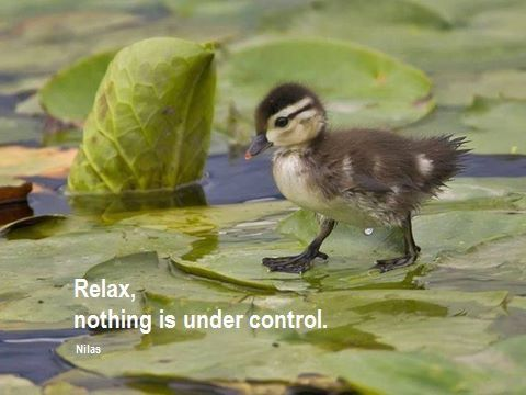 Relax, Nothing is Under Control  -Nilas