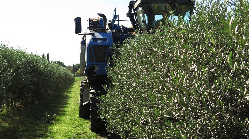 Pin su Consorzio Agrario di Siena