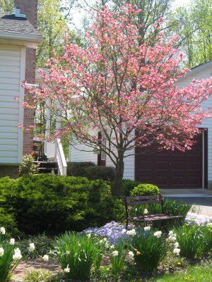 dogwood tree country cottage