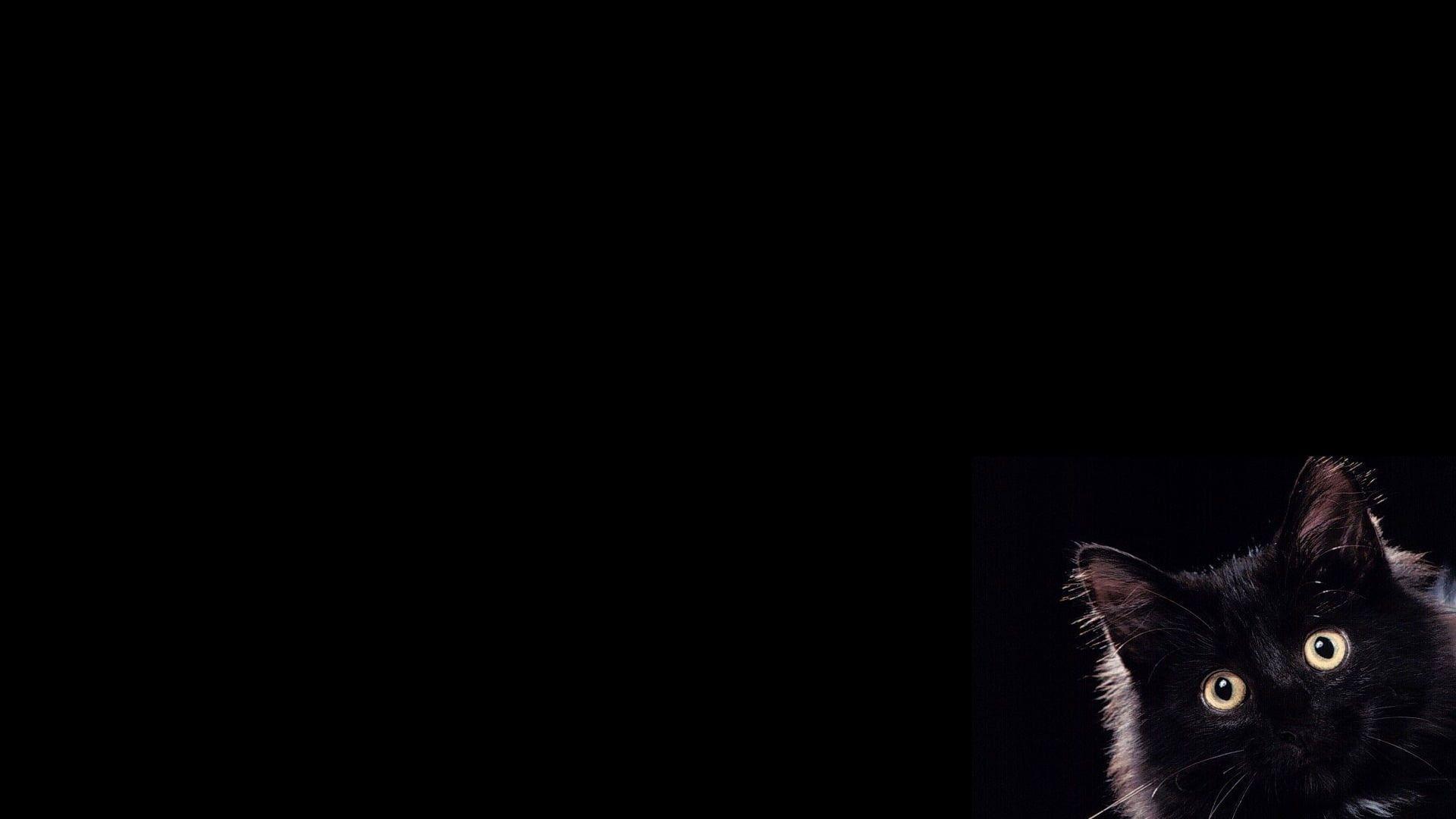 Black Cat Wallpaper Pets Animal Themes Domestic Domestic Cat Domestic Animals Cat Wallpaper Domestic Cat Cat Dark