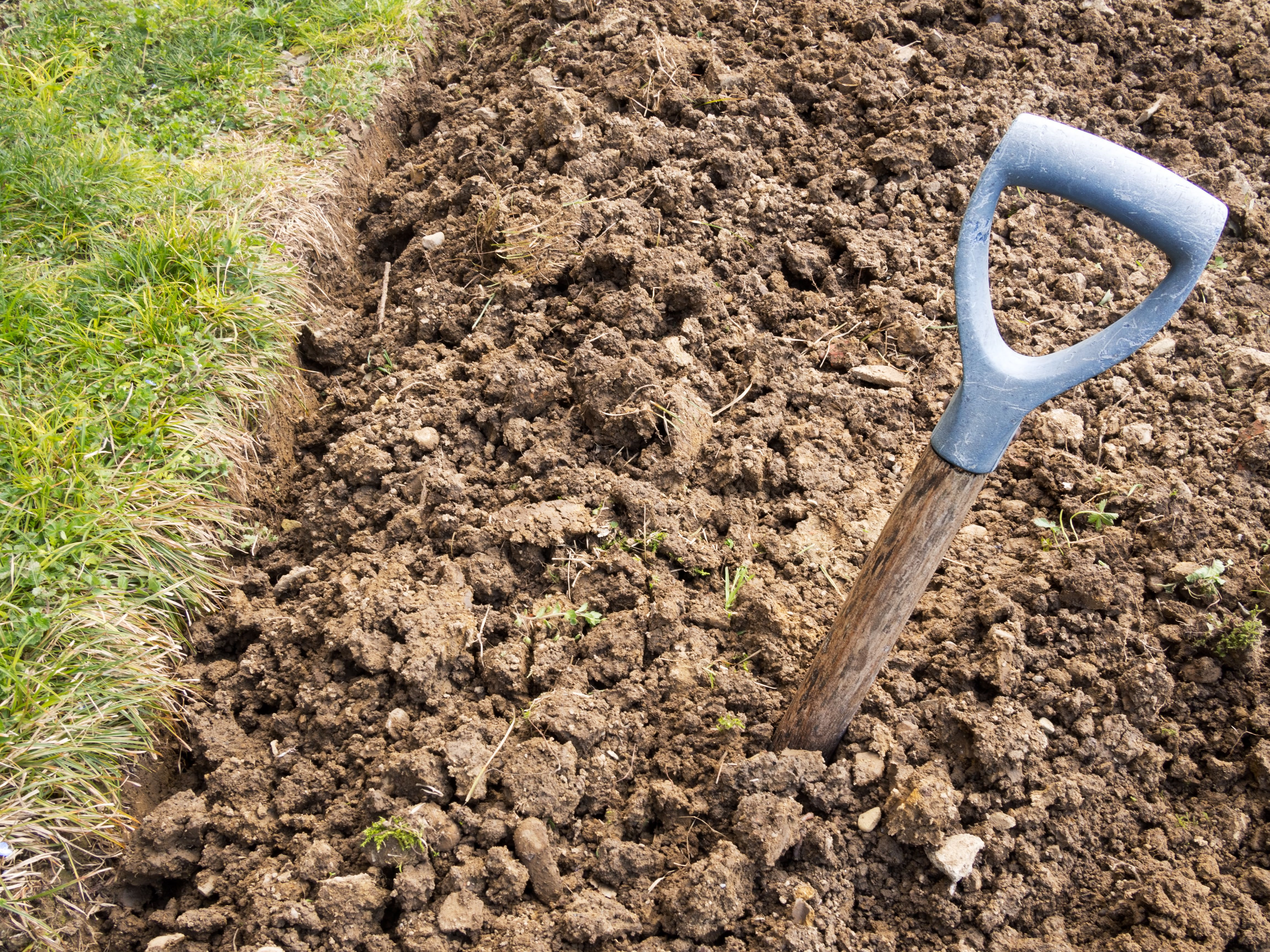 The Best Plants For Clay Soil Grow In Full Sun And Partial Shade