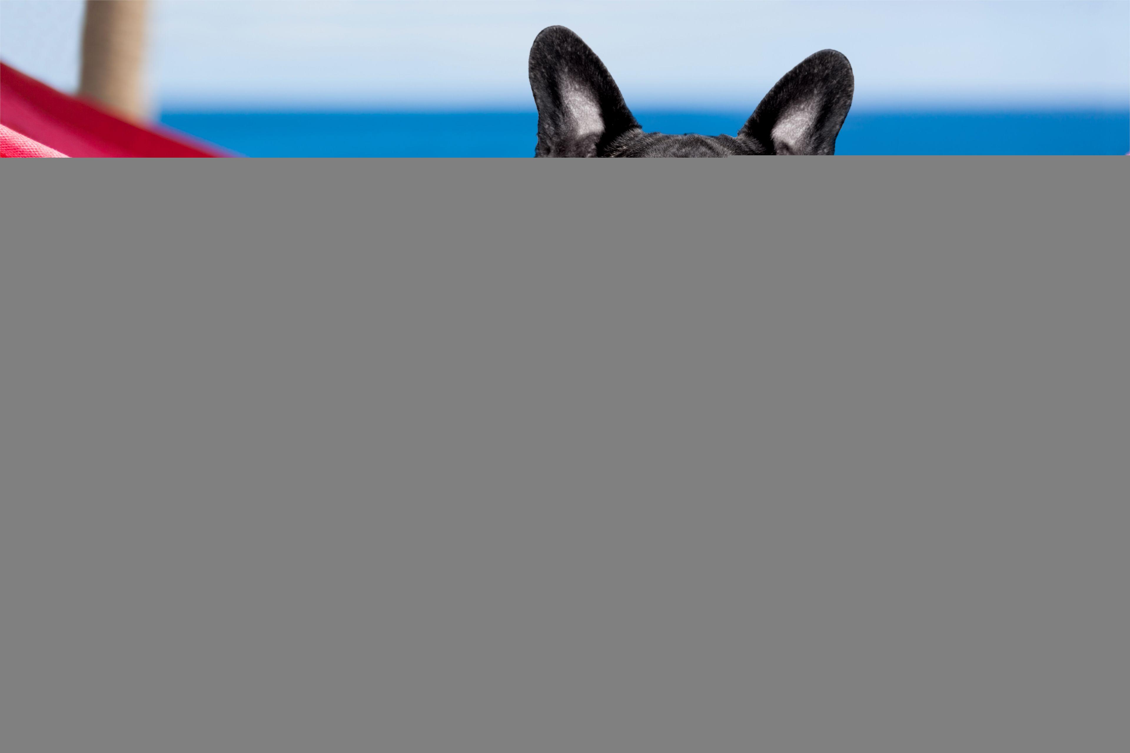 Pies Buldog Francuski Okulary Gazeta Hamak Certapet Emotional Support Dog Dog Travel