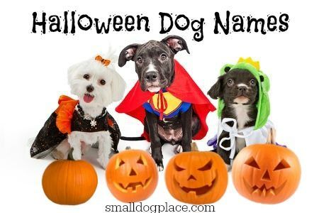 Halloween Dog Names Which Spooky One Will You Choose Dog