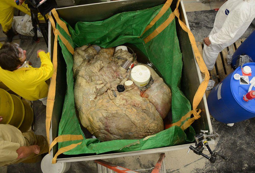 صور قلب الحوت الأزرق صور و فيديو العلوم سبيلنا Vegetables Stuffed Mushrooms