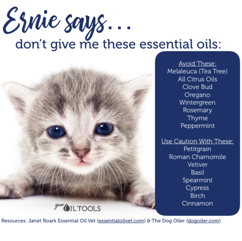Essential Oils For Cats Essential Oils Are Essential