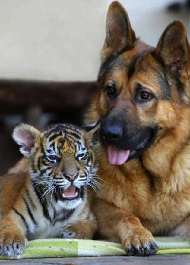 Pin Su Interespecies Friends
