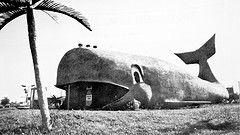 The Big Whale Car Wash On Military Road Car Wash Niagara Falls Lewiston