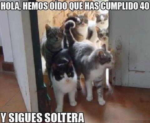 Memes Chistes Humor Funny Invequa Gato Gatos Catmemes Memes En Espanol Memes De Gatos M Funny Pictures With Captions Crazy Cats Funny Animal Pictures