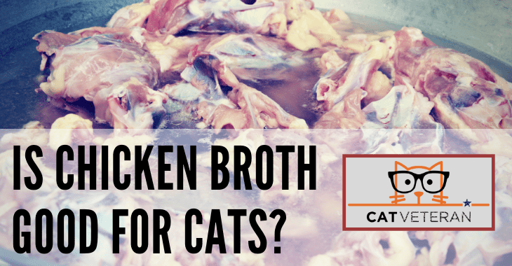 is chicken broth good for cats Chicken broth, Quick easy