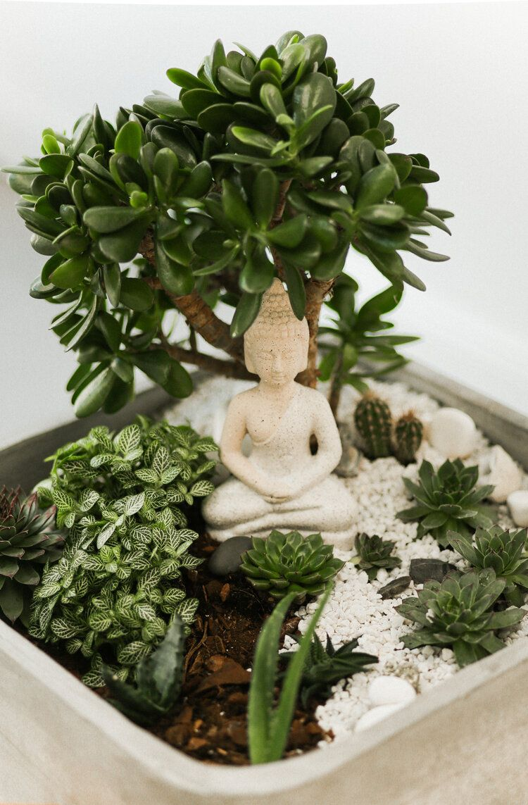 How to make your own zen terrarium in 8 easy steps