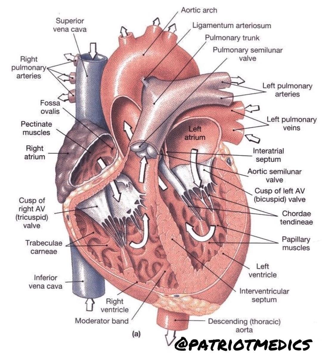 Who loves cardiology I do I do I do oooooooh If you dont know ...
