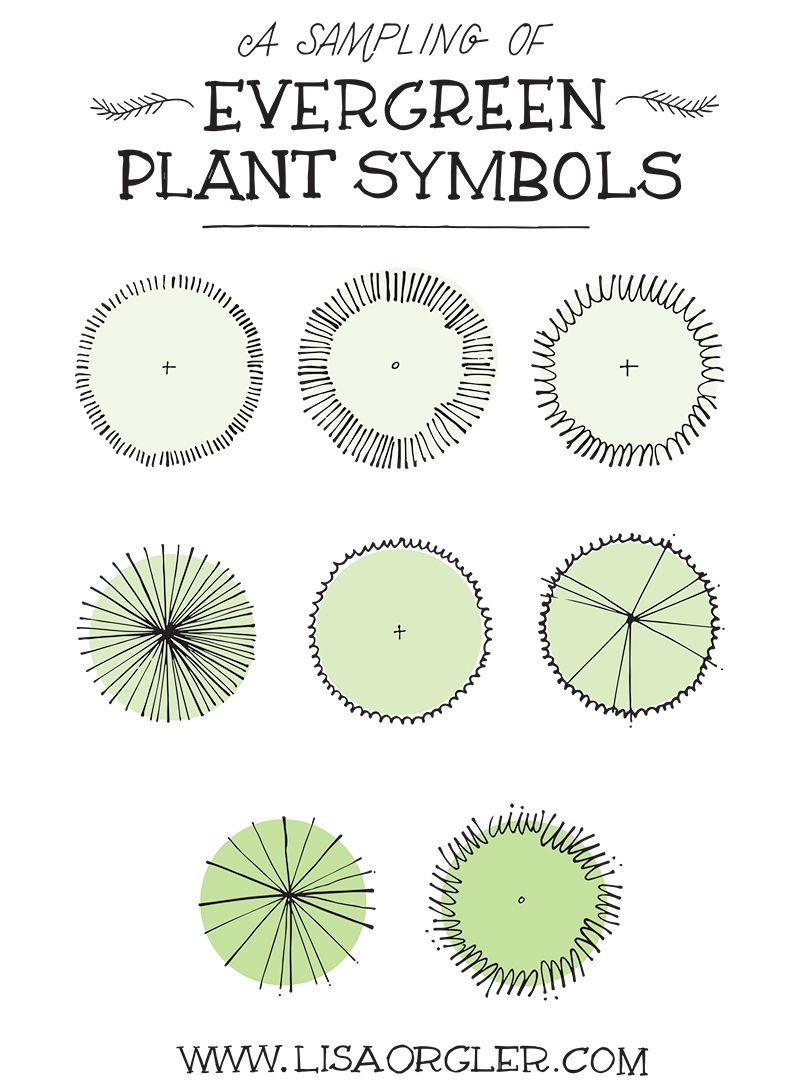 Drawing Plant Symbols Practice Sheet Landscape Design Drawings