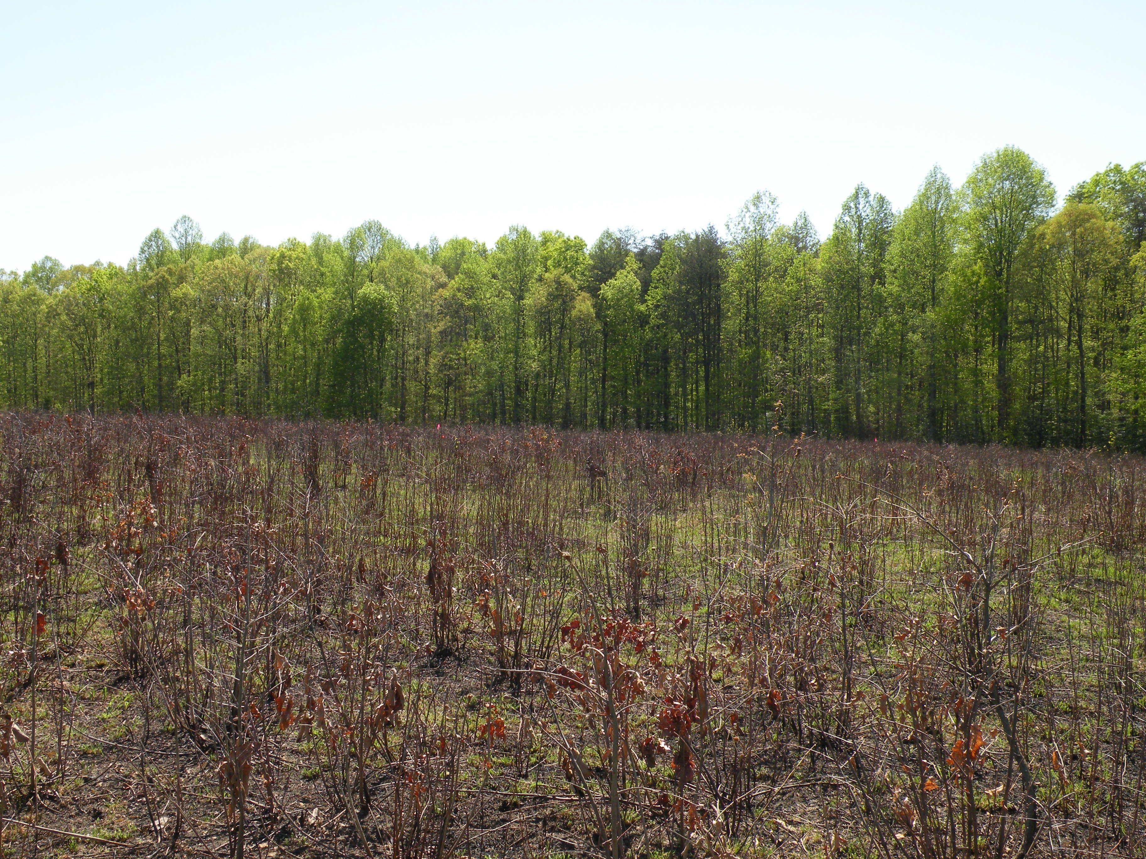 The Spotsylvania fields today. Civil war, Natural