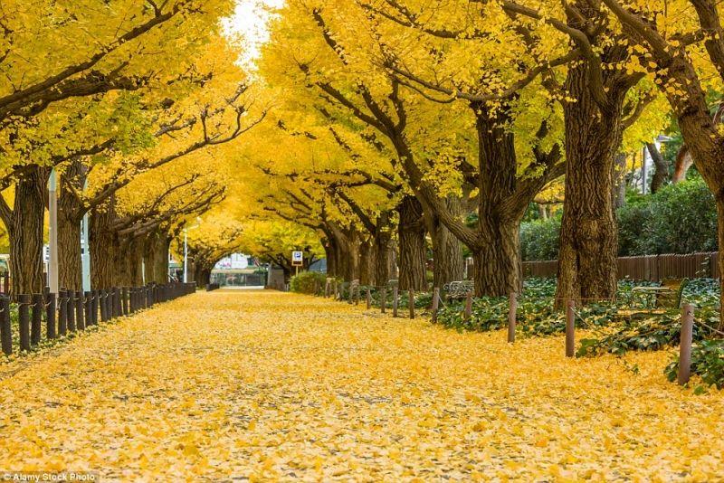 Choáng ngợp với những con đường mùa thu đẹp nhất thế giới  https://ift.tt/2nYDzxA Không chỉ phục vụ nhu cầu đi lại những con đường  này…   Phong cảnh, Mùa thu, Cánh