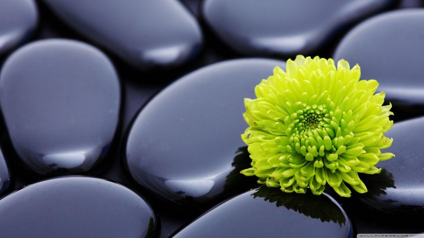 Wallpaper steine blumen  modern zen garden wallpaper - Google Search | LA_MOOD | Pinterest