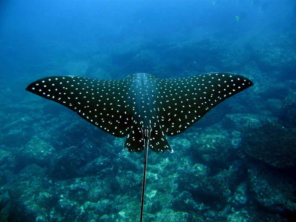Diving Cocos Island Costa Rica Cocos Island Diving Underwater
