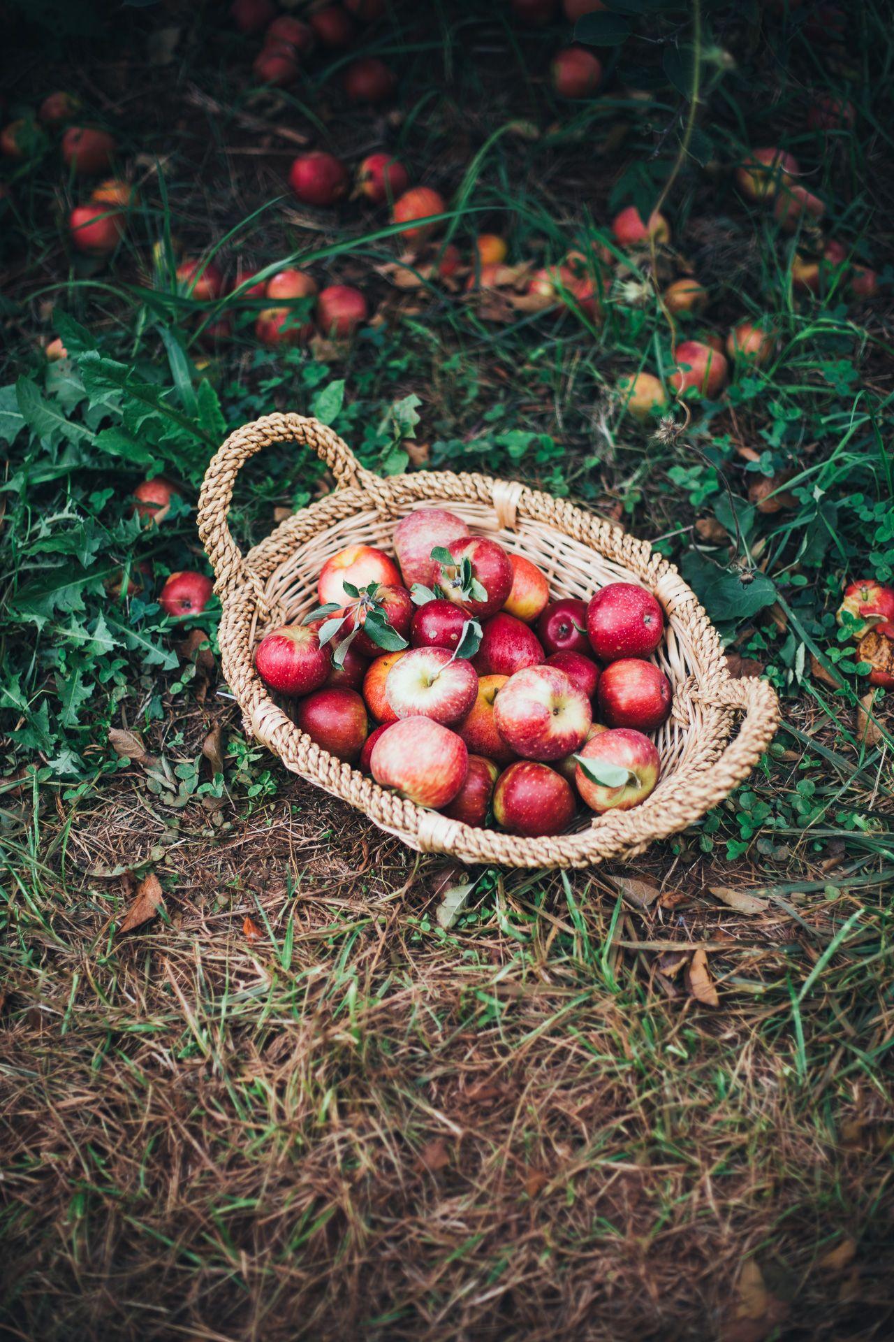 Apple Pie Oatmeal (Vegan, Refined Sugar Free) Recipe