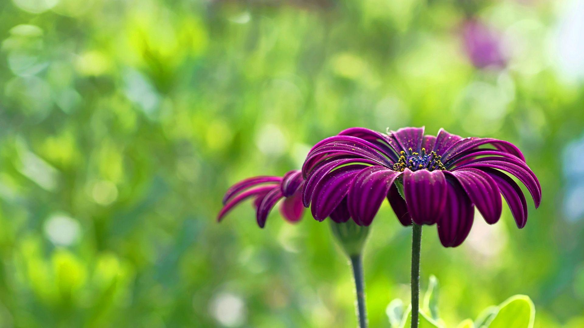 Summer Flower HD