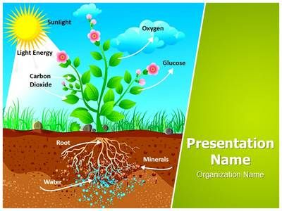 Plant photosynthesis powerpoint template is one of the best plant photosynthesis powerpoint template is one of the best powerpoint templates by editabletemplates toneelgroepblik Images