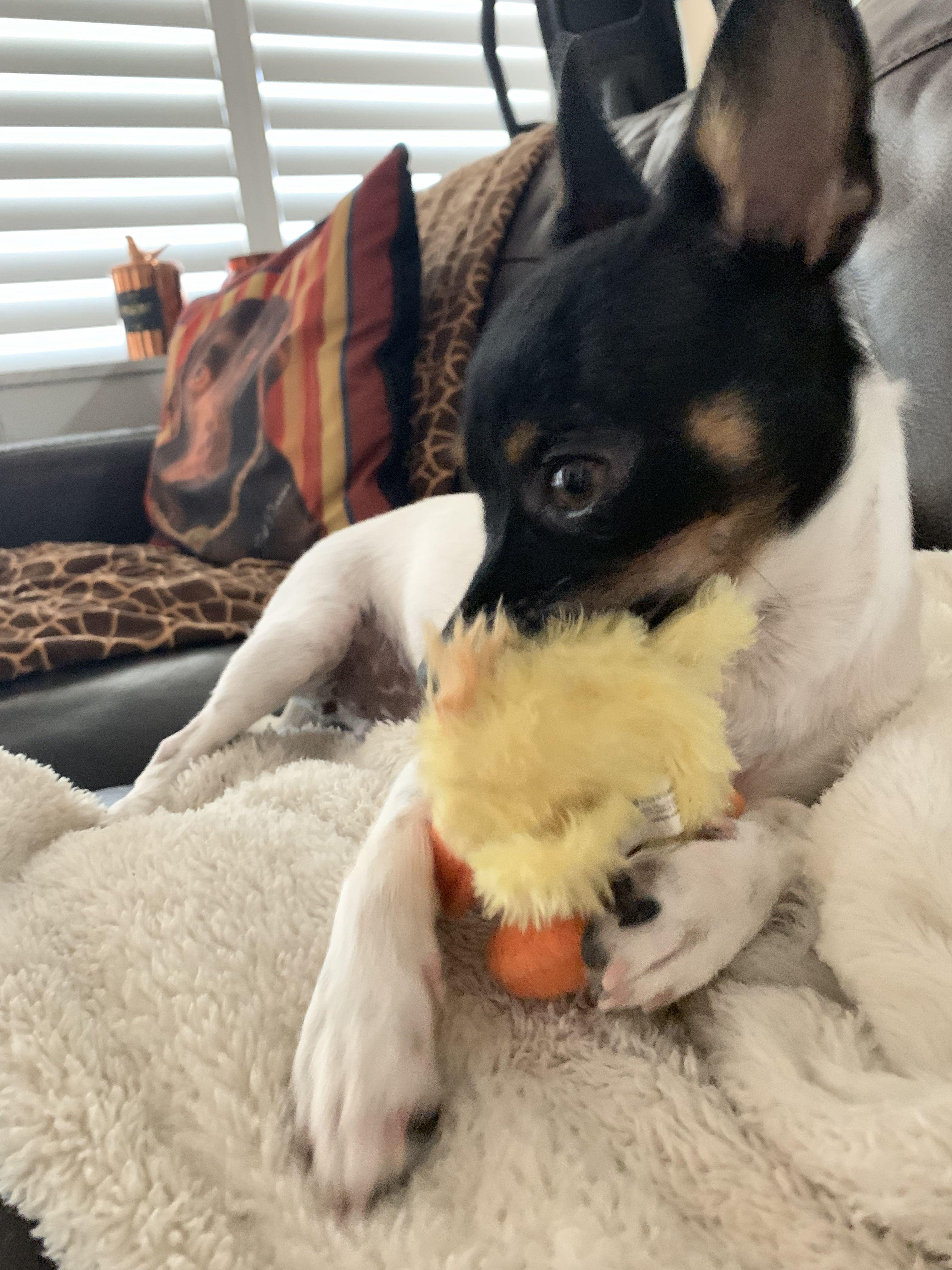 Pound puppy rescue az