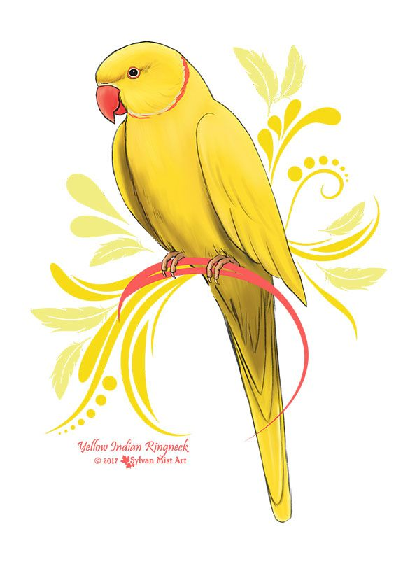 39+ Yellow parrot information