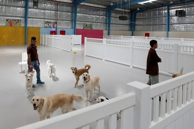 Huge Indoor Dog Park Is All About Beating The Heat The National Anguspost Indoor Dog Park Indoor Dog Dog Boarding Kennels