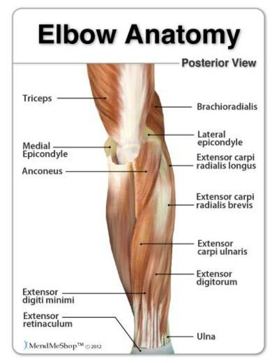 Elbow Anatomy Massage Therapy Pinterest Anatomy Therapy And