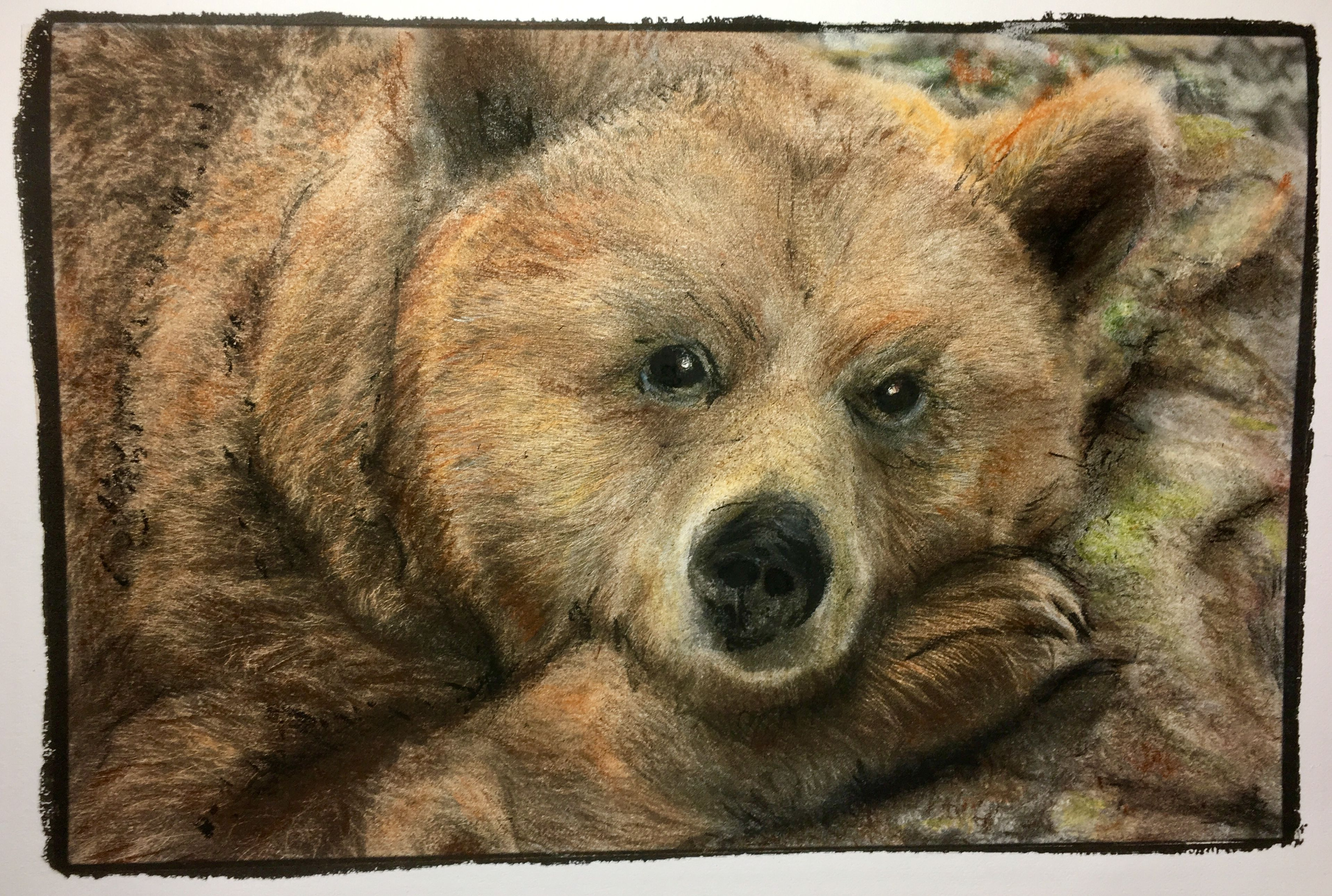 Bear. Soft pastels on a grayscale photograph. From the