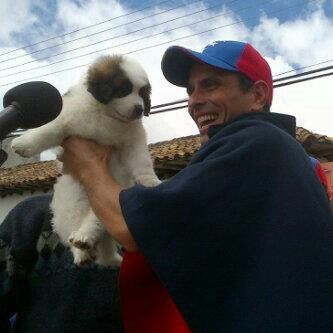 Henrique Luz Capriles Radonski Con Su Mascota Progreso En Mérida Panda Bear Animals Dogs