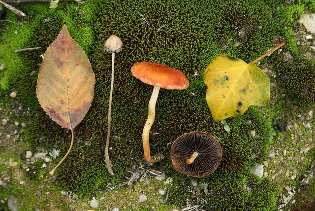 fall collection by carla.sofia, via Flickr
