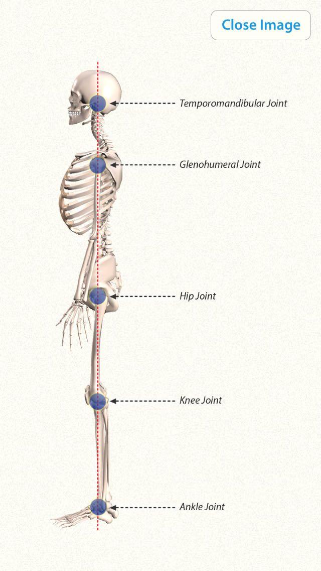 3D Yoga Anatomy (ios) AppCrawlr